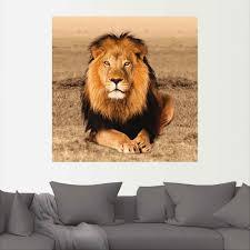 artland wandbild löwe wildtiere 1 st in vielen größen produktarten alubild outdoorbild für den außenbereich leinwandbild poster
