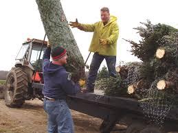Christmas Tree Baler Netting by Christmas Trees Wholesale Michigan Grown