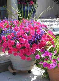 Container Gardening Flower Pots Ideas Home Inspirations With ... Painted Flower Pots For The Home Pinterest Paint Flowers Beautiful House With Nice Outdoor Decor Of Haing Creative Flower Patio Ideas Tall Planter Pots Diy Pot Arrangement 65 Fascating On Flowers A Contemporary Plant Modern 29 Pretty Front Door That Will Add Personality To Your Garden Design Interior Kitchen And Planters Pictures Decorative Theamphlettscom Brokohan Page Landscape Plans Yard Office Sleek