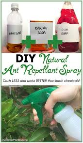 Best 25 Homemade spider spray ideas on Pinterest