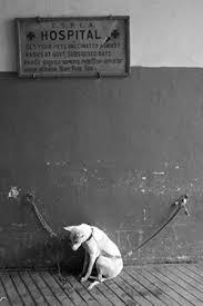 chambre a gaz animaux de compagnie euthanasie de chiens et chats par chambres à