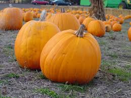 Motley Pumpkin Patch by Everything You Need To Know About Halloween Fall Activities In