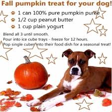 Libbys 100 Pure Pumpkin For Dogs by K9 Instinct Home Facebook