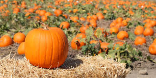 Old Auburn Pumpkin Patch by 25 Pumpkin Patches In Alabama You Need To Visit This Fall