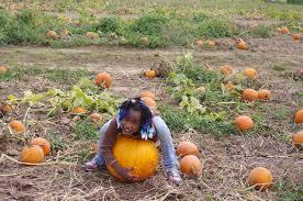 Pumpkin Picking Richmond by Best Pumpkin Patches In Washington D C