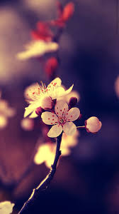 Nice Wallpaper For Cell Phone Flower Mobile Hd Find This Pin And More On Wallpapers By Vactualpapers Pic Wsw3076505