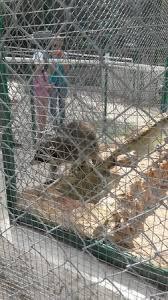 zoo picture of zoo fauverie du faron toulon tripadvisor