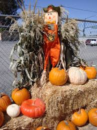 Pumpkin Patch In Yucaipa by South Barrington Illinois Real Estate And South Barrington