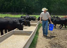 Price numbers are up for beef cattle in state