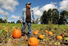 Tims Pumpkin Patch by Central New York Pumpkin Crop Early But Great Prices Expected To