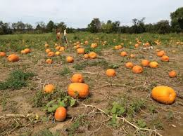 Pumpkin Patches Columbus Oh by Libby U0027s Pumpkin Patch Home