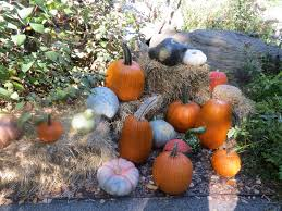 Pumpkin Patch Miami Lakes by 761 Scarecrows And Pumpkins