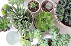 schlafzimmerpflanzen servus