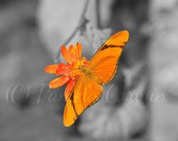 Butterfly Art Black White Orange Print Julia Heliconian 8x10 Pop Of