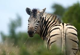South Africa InformationSouth African Wildlife