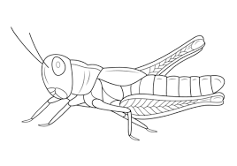 Click To See Printable Version Of Grasshopper Coloring Page