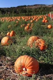 Pumpkin Patch Rv Park Hammond La by 19 Best Fossils Images On Pinterest Fossils Anthropologie And