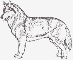 Awesome Husky Coloring Pages Collection 20 J