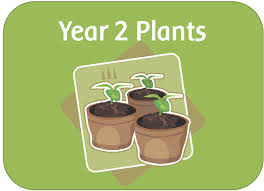 Pumpkin Stages Of Growth Worksheet by Year 2 Science Plants Topic Powerpoints Planning Worksheets