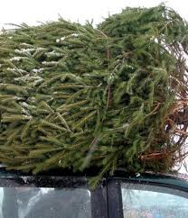 Frasier Christmas Tree Cutting by Permits U0026 Guidelines To Cut Your Own Christmas Tree Winter Park