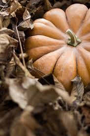 Cinderella Pumpkin Seeds Australia by 1190 Best Fabulous Fall Images On Pinterest Fall Autumn Fall