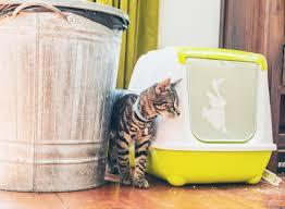 répulsif pour canapé les répulsifs pour chats yummypets