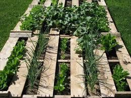 Diy Pallet Veggie Garden Elegant Vegetable Ideas