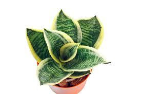 pflanzen im schlafzimmer diese zimmerpflanzen sind gesund