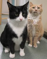 renal failure in cats chronic renal failure in cats causes symptoms and diagnosis
