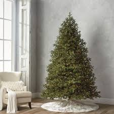 Balsam Fir 9 Full Profile Tree With Stand