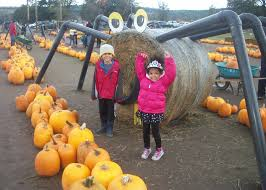 Pumpkin Patch Puyallup River Road by Puget Sound Farms With Pumpkin Patches Corn Mazes And U Pick Apples