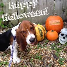 Coconut Grove Halloween 2013 by Tips For Walking Dogs On Halloween Equipaws Pet Services