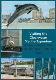 Our Experience At The Clearwater Marine Aquarium In Florida Home To Movie Stars