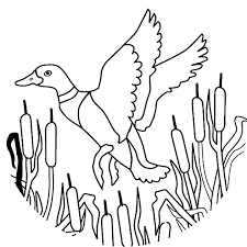 How To Draw Flying Mallard Duck Coloring Pages