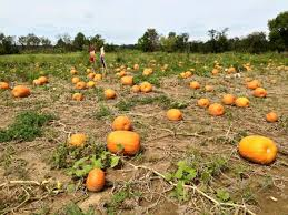 Columbus Ohio Pumpkin Patches by 10 Great Pumpkin Patches In Ohio This Fall