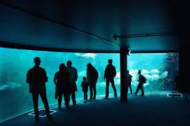 aquarium geant a visiter belgique nausicaa l aquarium géant de boulogne sur mer