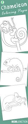 Chameleon Digital Coloring Book Best Pages For Your Toddler Pens To Print Full Size