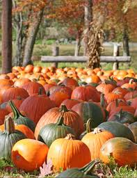 Best Atlanta Pumpkin Patch by Inspired By The Season 7 Fun Ways To Enjoy The Best Things About