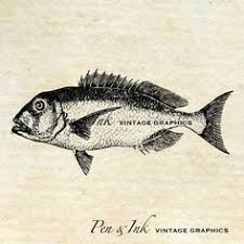 Dentex Fish Digital Vintage Graphic Antique By PenandInkVintage