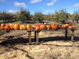 Pumpkin Patches Santa Cruz Area by Events U2013 Live Earth Farm