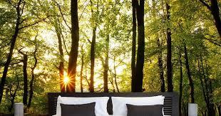 fototapete sonnenuntergang zwischen den bäumen fototapete