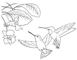 73 Best Humming Birds Art Coloring Images On Pinterest