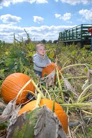 Denver Co Pumpkin Patch by Pick Your Own Pumpkin U2014 Country Barn