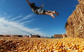 Pumpkin Patch Sacramento 2015 by Pumpkin Harvest Ready And Waiting The Sacramento Bee