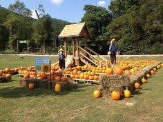 Pumpkin Patch Playground Chattanooga Tn by Enjoy This Fall Festival Attraction With The Critter Corral