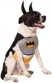 cat batman costume the 25 best batman costume ideas on dachshund