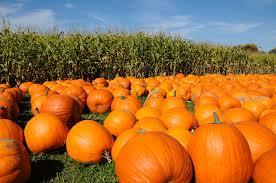 Best Pumpkin Patch Hampton Roads by Pumpkin Farms Near Toronto