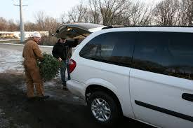 Driftwood Christmas Trees Cornwall by Christmas Trees Minnesota Prairie Roots