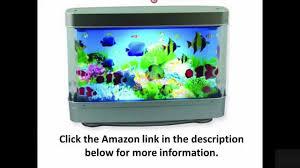 aquarium l with fish in motion