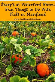 Apple And Pumpkin Picking Maryland by Fun Things To Do With Kids In Maryland Sharp U0027s At Waterford Farm